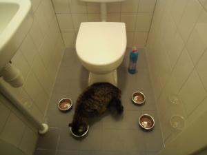 handig tegen katten, die in toiletpot willen springen...