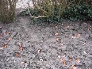 Uitgelopen paadje in Katman Harry's tuin