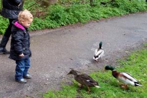 kind voert eendjes, interactie