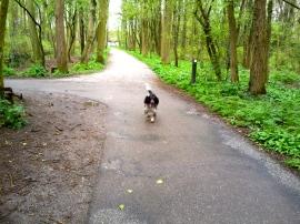 jachthond op bospad
