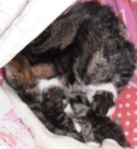 pasgeboren kittens