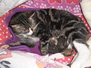 Pippi poes met net geboren kittens, jong geluk, babypoesjes