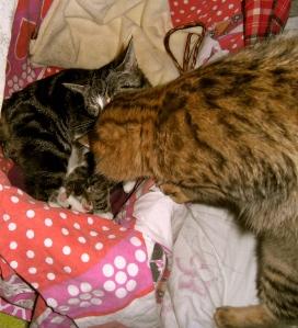 pappa kat, mamma kat en kittens