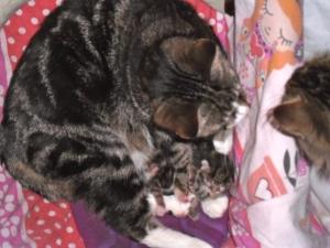 pappa kat, mamma kat, kittens
