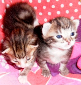 kittens, poesjes
