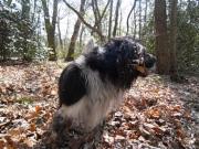 hond in dor blad