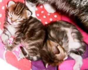 poesjes, kittens,