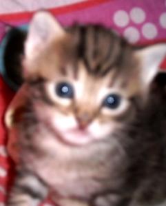 poesjes, kittens