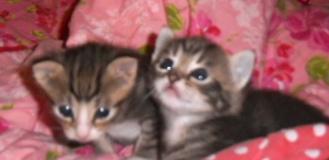 POESJES kittens