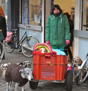 Doglady en haar hondjes, roedel