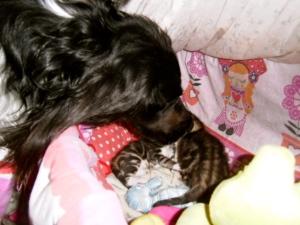 jachthond en kittens, kleine poesjes en hond