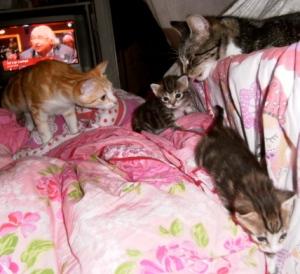 poesje, kittens
