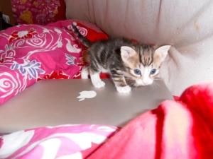 kittens spelen in kartonnen dozen, kleine poesjes