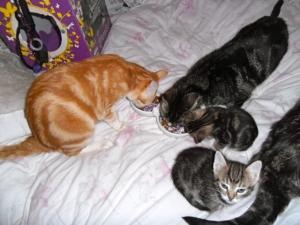 Kittens met moeder, kleine poesjes, schattig, lief, zoet