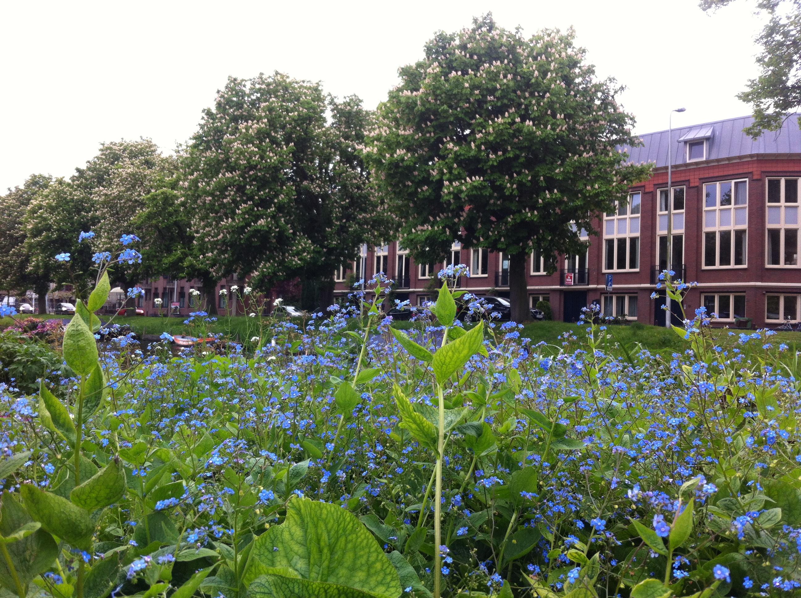 In de Singeltuin staat van alles te bloeien, Leiden