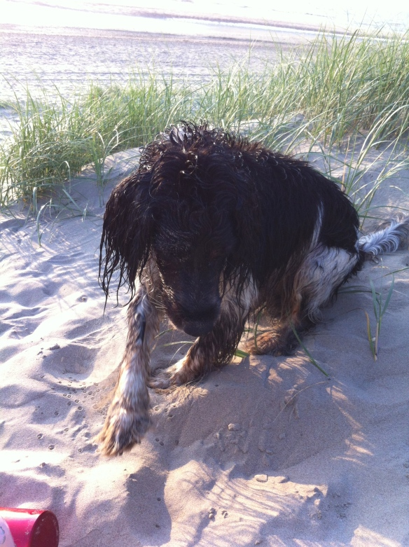 nat hondje, strand,