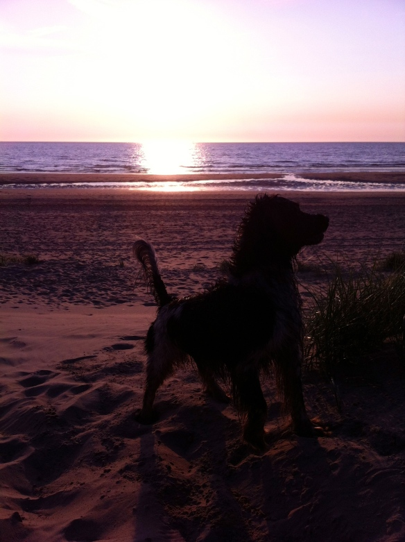 nat hondje, strand, zee, zonsondergang