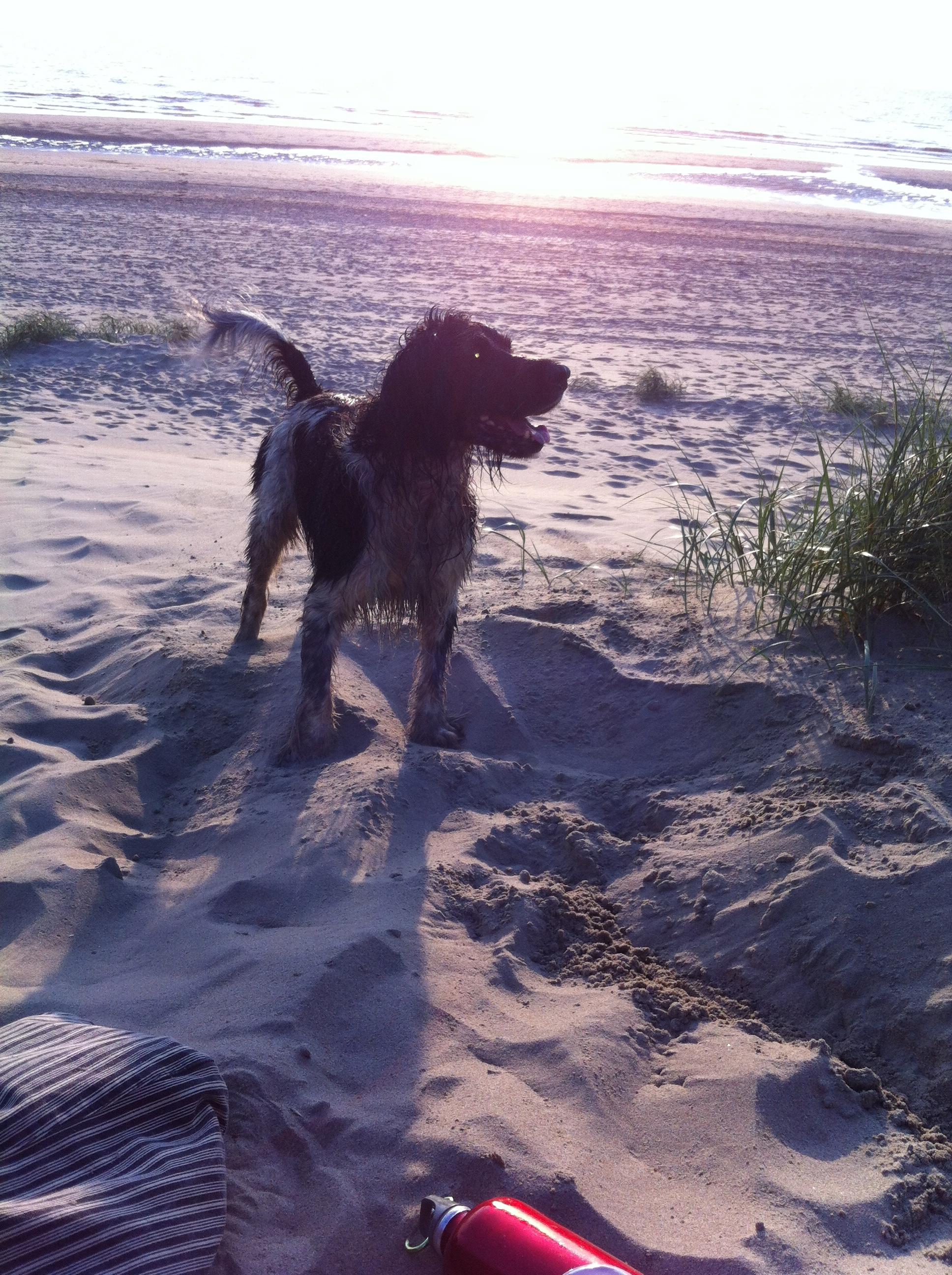 nat hondje, strand, zee