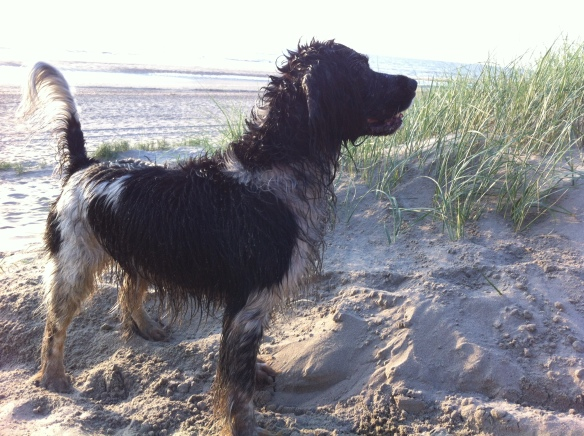 nat hondje op strand