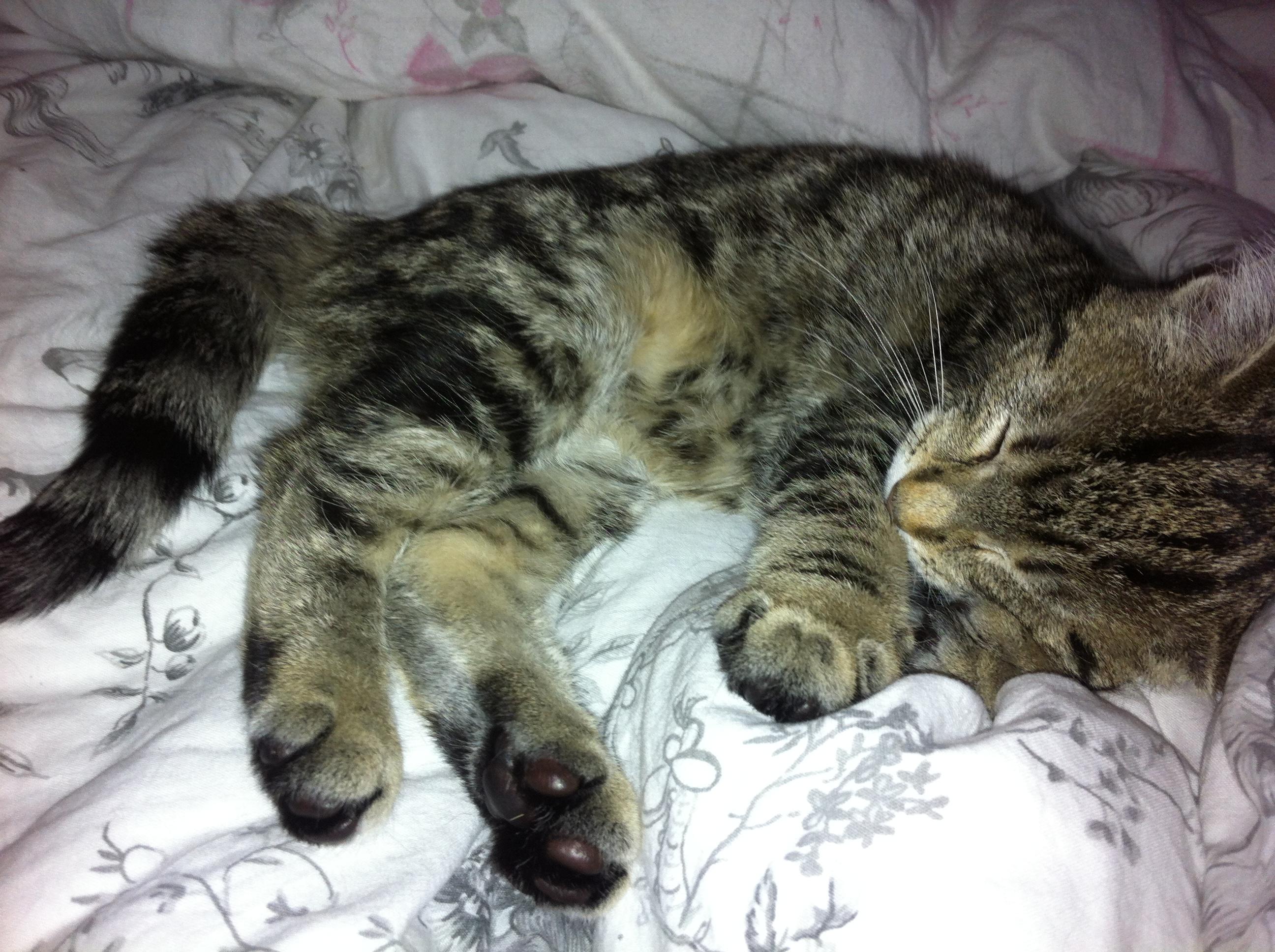slapend poesje, kitten