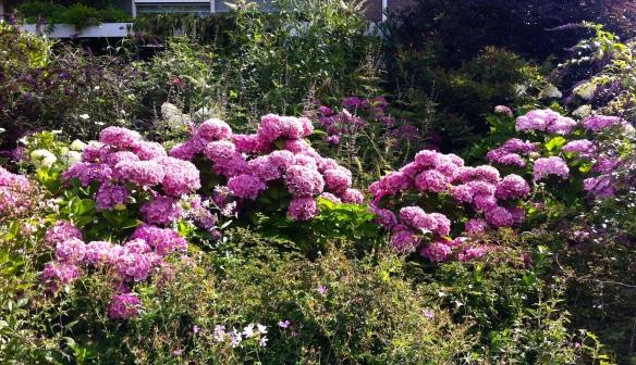 tuin aan de Singel in Leiden,