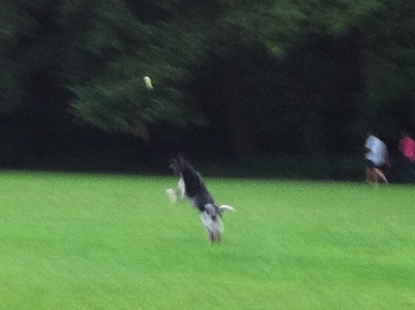 hond en bal, capriool