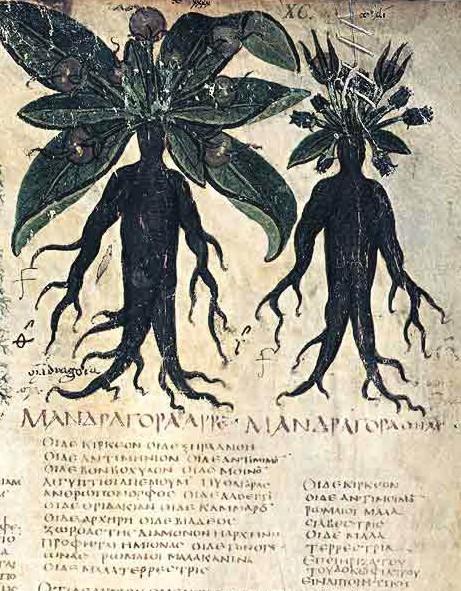 Mandragora plantmannetjes