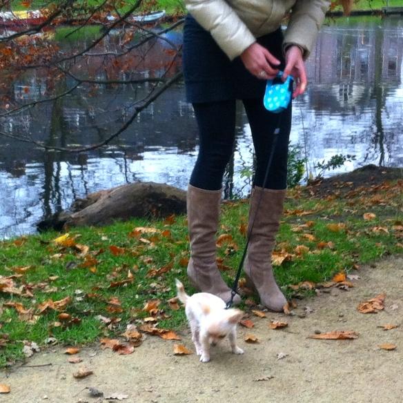 Jonge vrouw met Chihuahua-pup , leuke pup