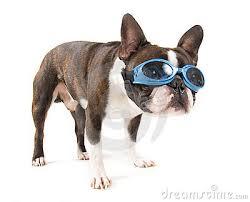 rare, gekke brillen, beesten met bril, dieren met bril,