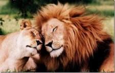 verliefd, liefde, hart, love, amor, verliefdheid, geliefden