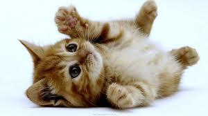 kittens, kitten, kleine poesjes, baby poesjes