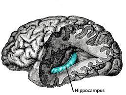 hersenen en slapen