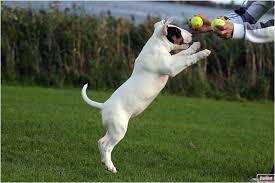 Hond, studenten met hond, lezende hond, hondenzaken, hond met mens