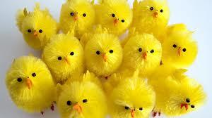 Pasen, kuikens, vrolijk pasen