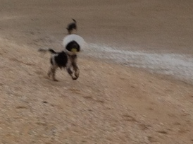 Ysbrandt, Cowboy, strand, hondje met kraag speelt met de bal, hond met kap speelt met bal