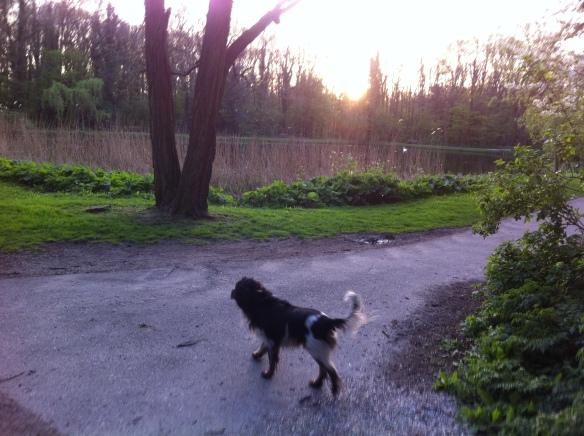 hondje in park