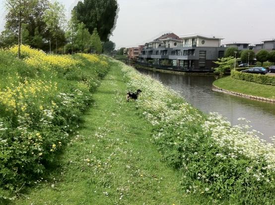 hondje tussen fluitenkruid