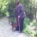 oud hondje met grijze snoet