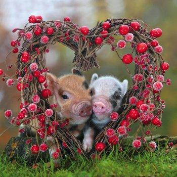 verliefde varkens, pigs in love, biggetjes met hart, bloemenhart met varkens