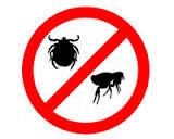 vlooienplaag, vlooien, flee, jeuk, krabben, bijten, allergisch, vlooienmijt, vlooienlarve, volwassen vlooien, kriebelen, plaag,