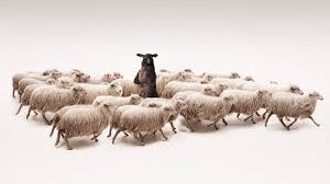 tele2, schaap, schapen, reclame voor, pratend schaap