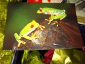 wensdoos, kikkers, kikkertje, ansichtkaart met kikkers