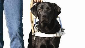 blindengeleidehonden , hulphonden, hond is je beste vriend