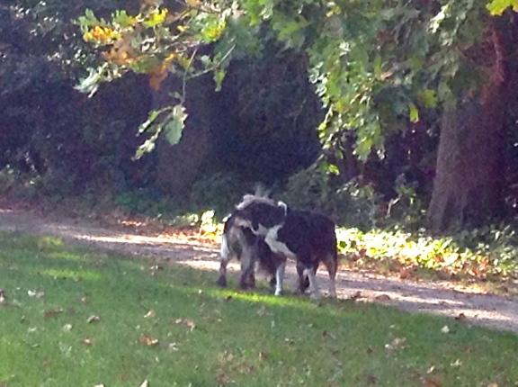 hondje, spelende hond, park met hond, wit/zwarte hond, hondjes