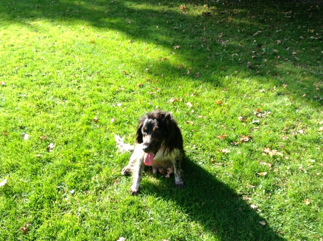 hondje, spelende hond, park met hond, wit/zwarte hond, hondjes, zittend hondje