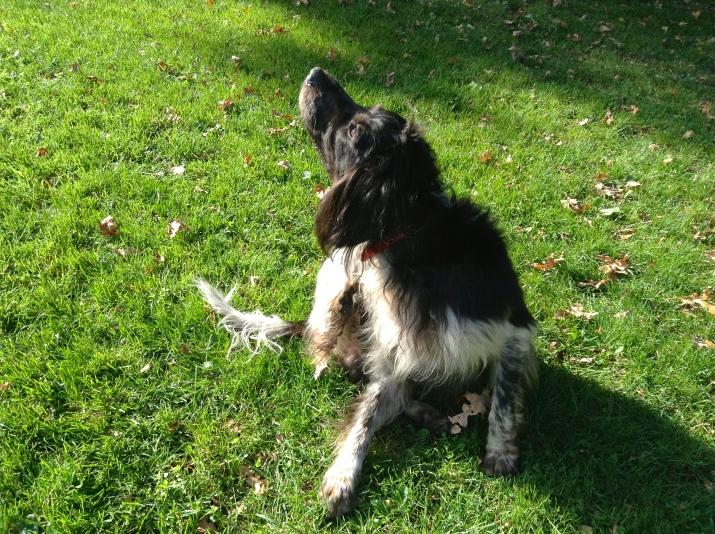 hondje, spelende hond, park met hond, wit/zwarte hond, hondjes, jeukend hondje