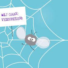 angstig vliegetje, spinnenweb