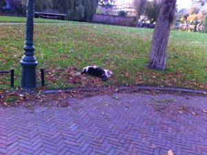 Leiden, herfst, mooie lucht, gloeiende kleuren ,hondje rolt in het gras