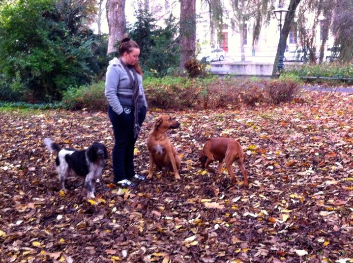 vrouw met Ridgeback, herfstbos, park in de herfst, ridgeback, honden in park, drie ridgebacks, puppy van Ridgeback, baasje met hond, spelende honden, spelende ridgebacks