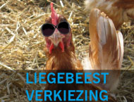 liegbeest,liegbeest verkiezing